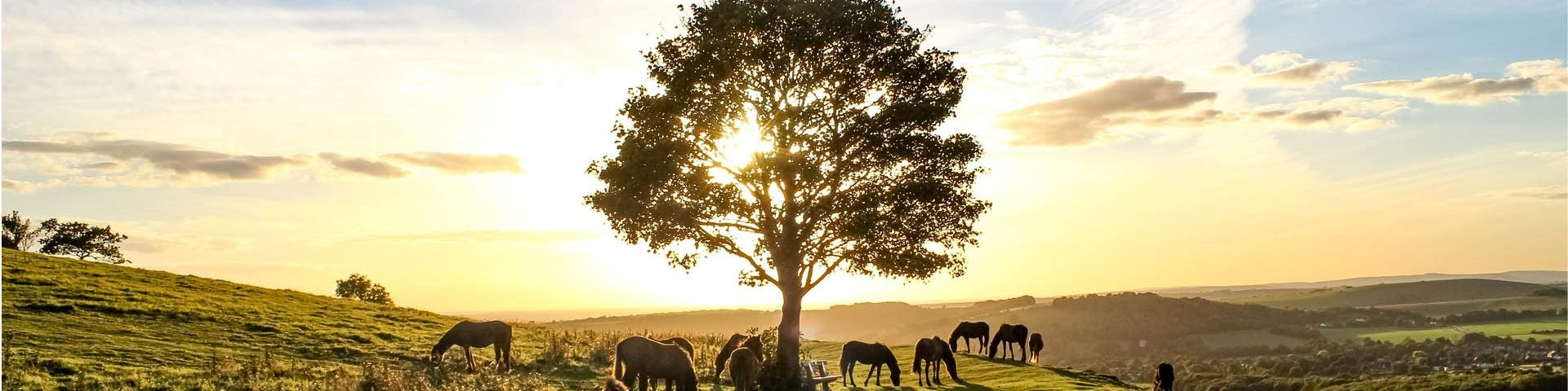 A tree, surrounded by horses in a deserted landscape, against a bright sunset.